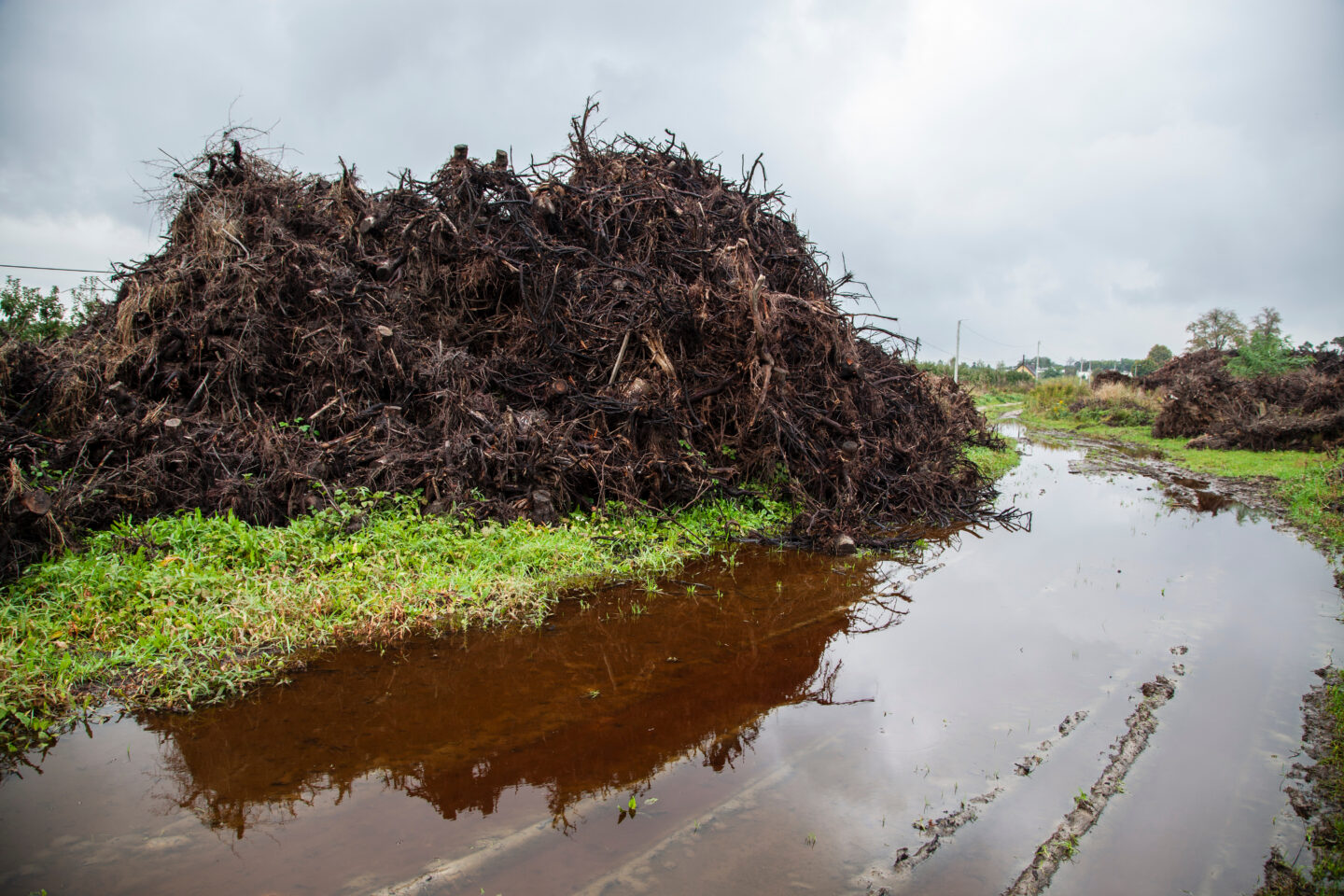 UNITARY GNAWING; SEVEN CONSIDERATIONS FOR THE CONSTITUENTS OF RHIZOPOLIS
